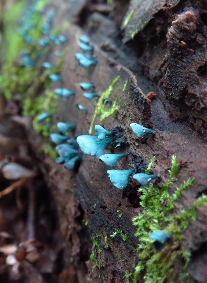 Mushroom#4.jpg