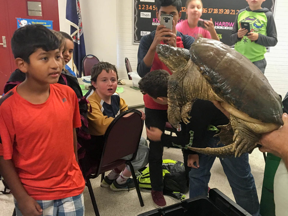 Galax after school - snakes and turtles-6.jpg