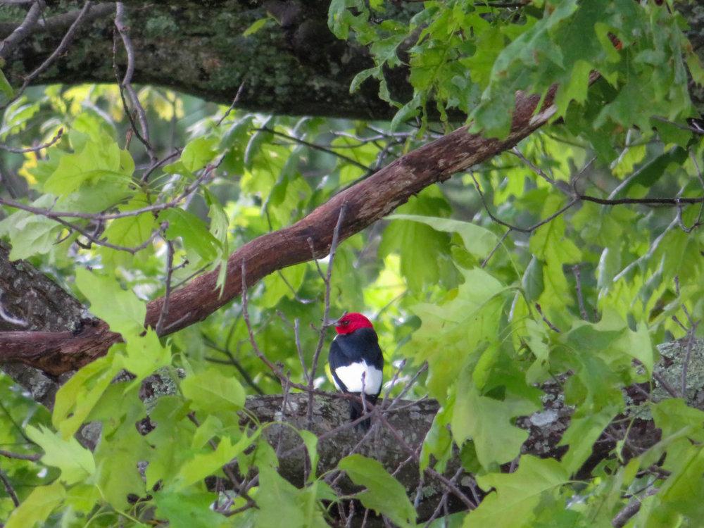 Burkes Garden Birding Field Trip — Blue Ridge Discovery Center