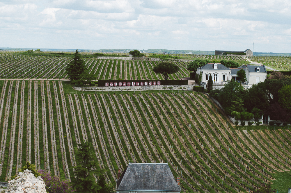 Vinyards in the Loire Valley.