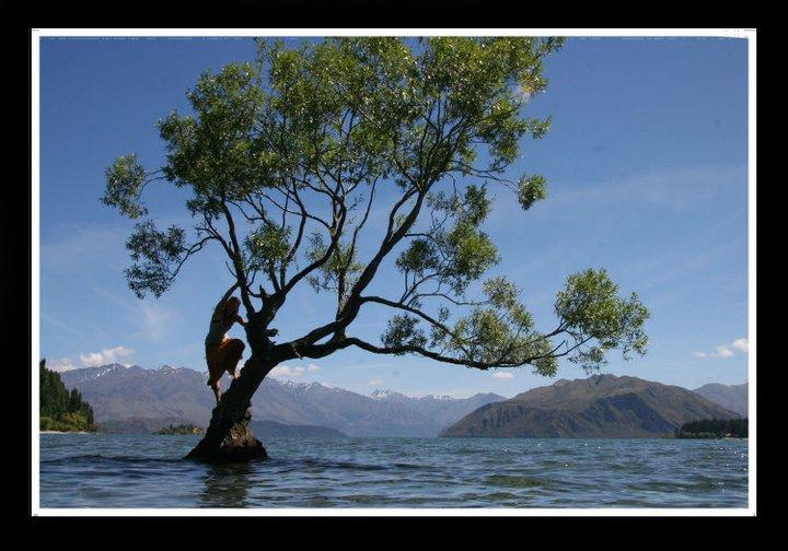 Swedish Bird in the Water Tree, NZ, 2010