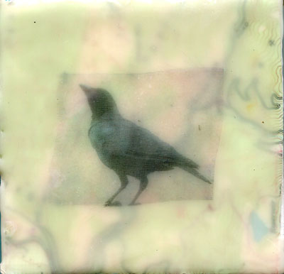 Blackbird.72dpi.jpg