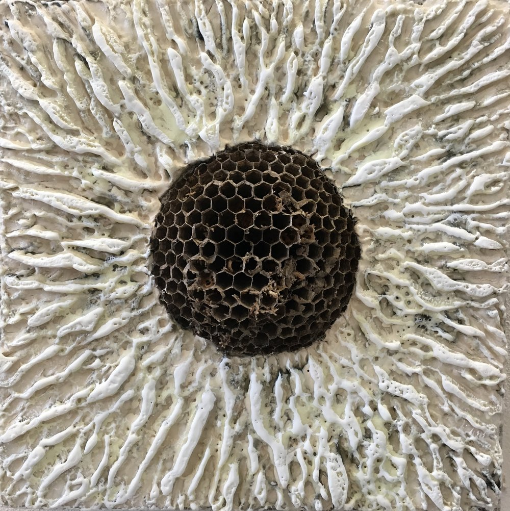 Gautreau.Emerge.10x10%22.encaustic,waspnest.panel.2018.jpg