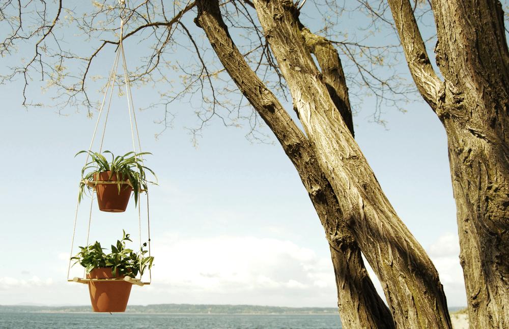 O-plants3.jpg