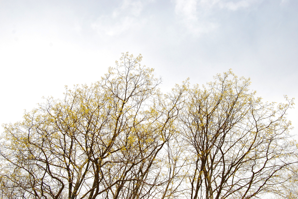 mood_shot_tree.jpg