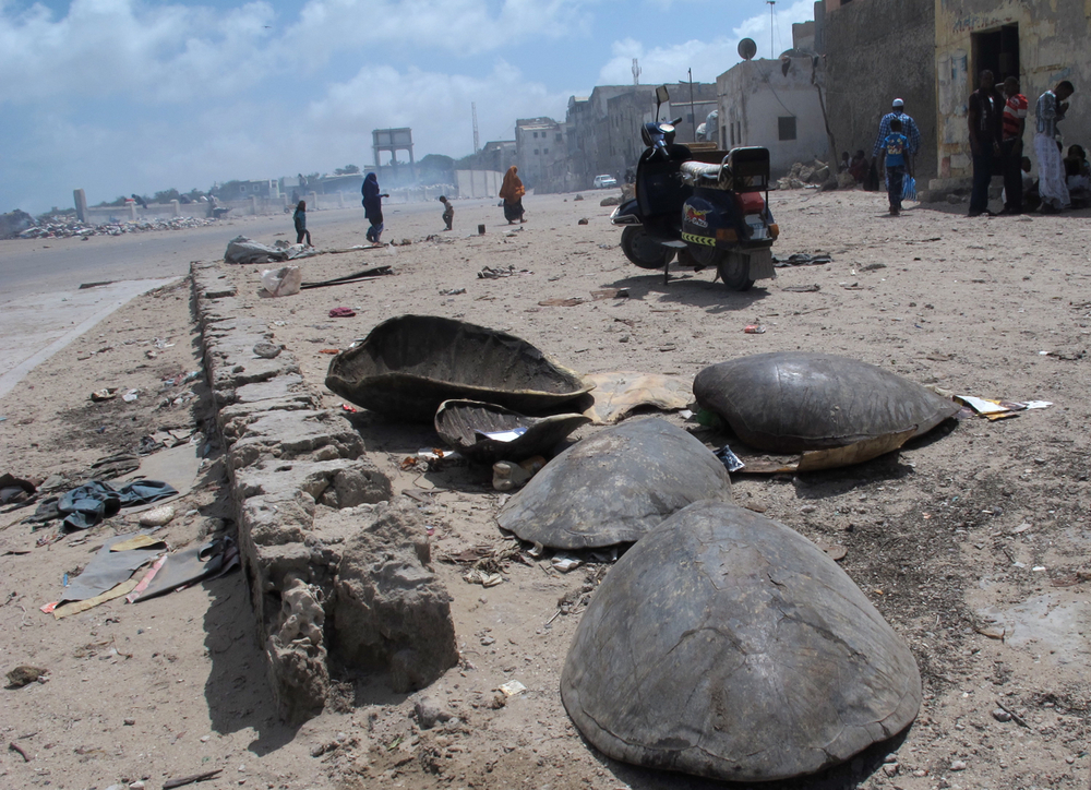Discarded tortoise shells.  Mogadishu fish market, Somalia. August 2012.
