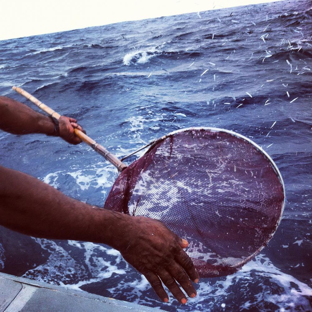NT_IG_Maldives_04.jpg