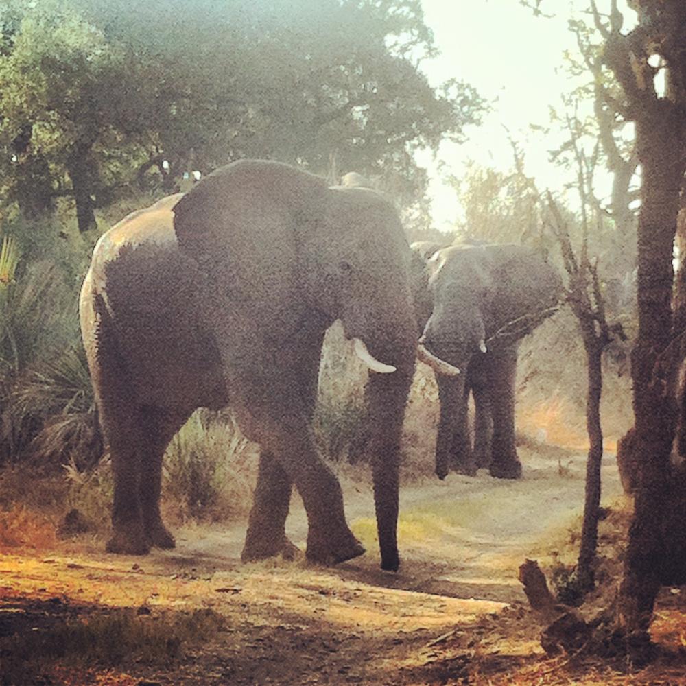 NTay_IG_Zambia_28.jpg