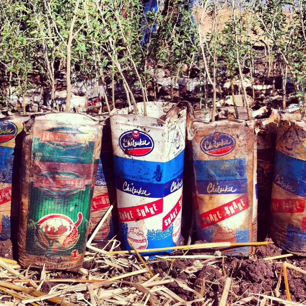 NTay_IG_Zambia_38.jpg