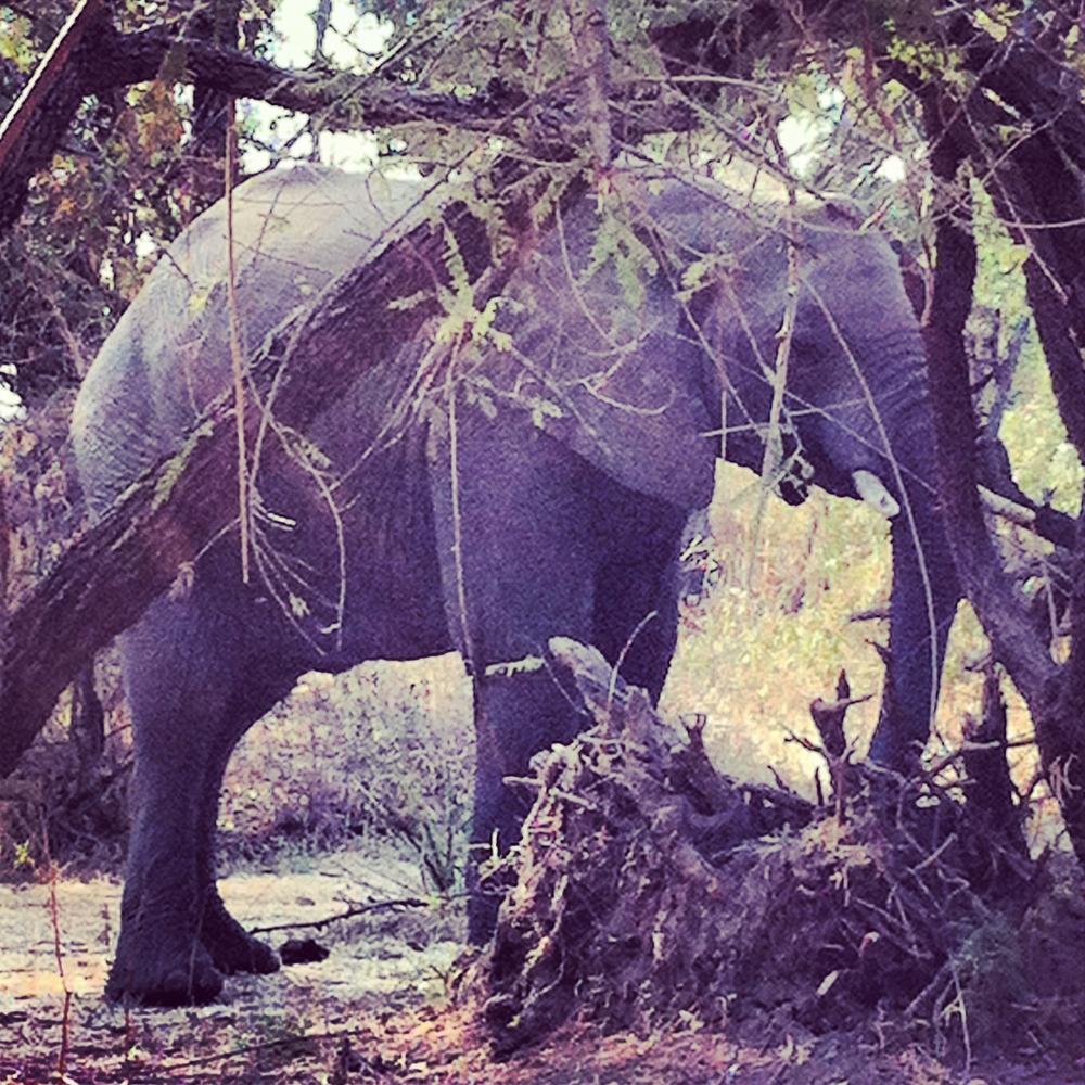 NTay_IG_Zambia_57.jpg