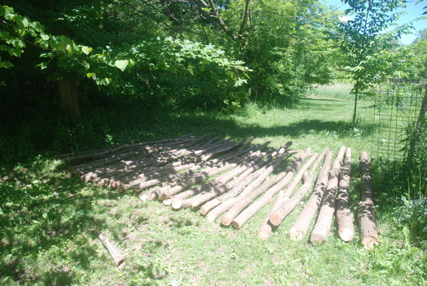 The posts. 32 ten-foot black locust posts from our land. Cut by Bob.
