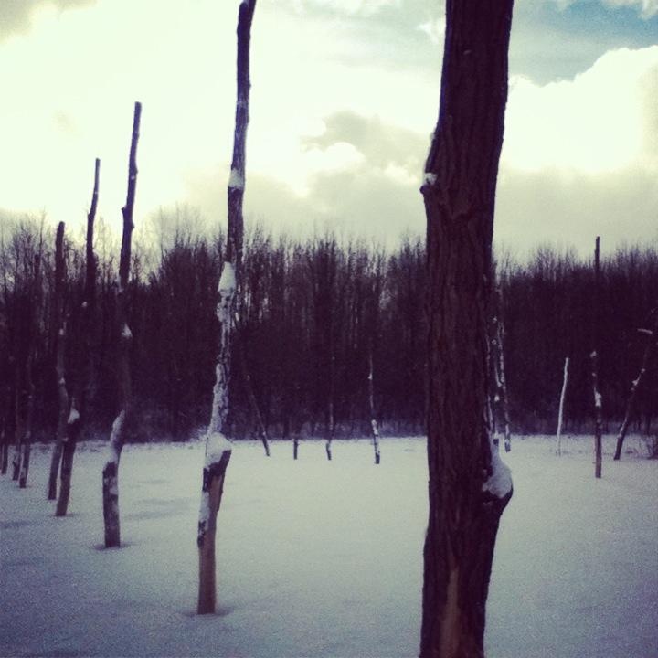 snowy hopyard.jpg