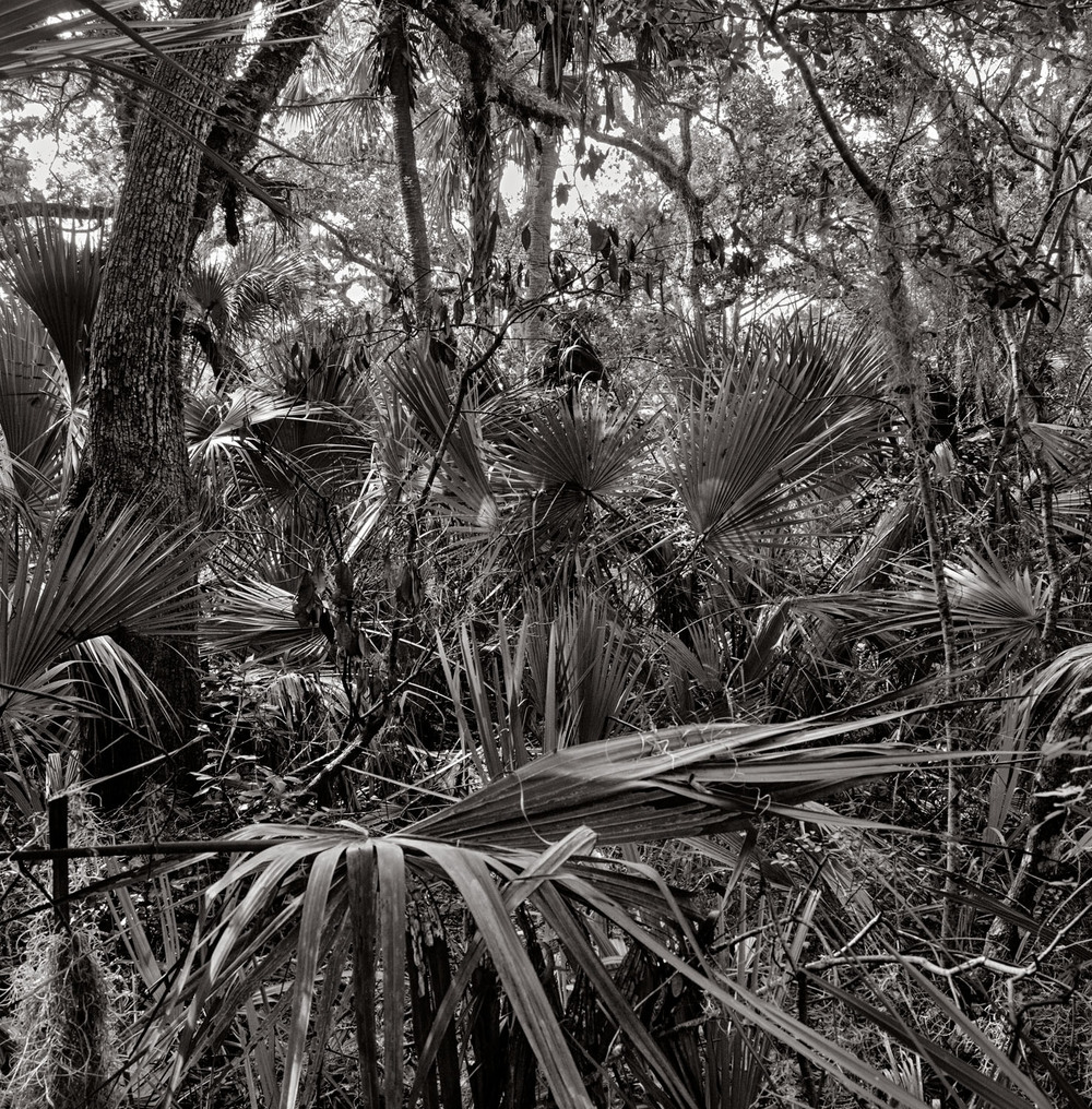 Richard Boutwell-Leica Monochrom-Washington Oaks, Florida #2