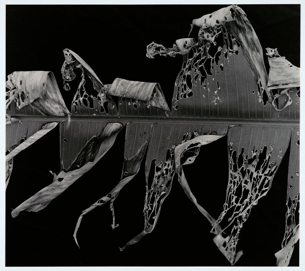 Brett Weston, Hawaii, Plate 3 - original scan