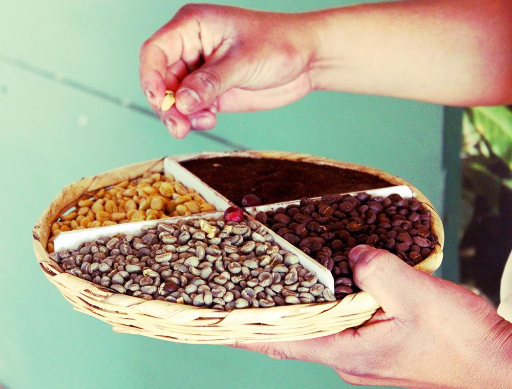 Guatemala Beans