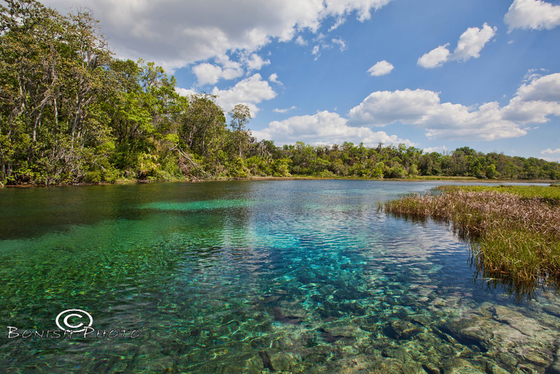 Looking down the Rainbow River - Crystal Clear water and blue skies - Rainbow Springs State Park - Photo by Pat Bonish-L.jpg
