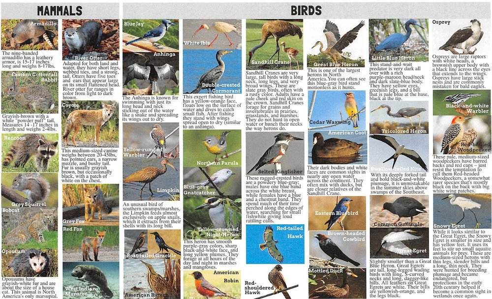 NativeSpeciesGuide-page-1.jpg