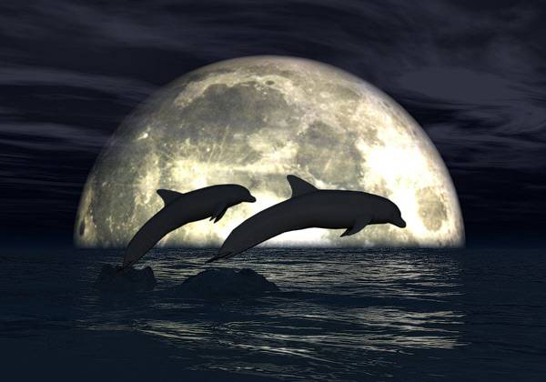 moonlight-dolphins-3d-wallpaper.jpg