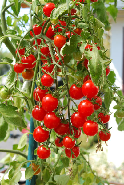 Via grow-it-organically.com