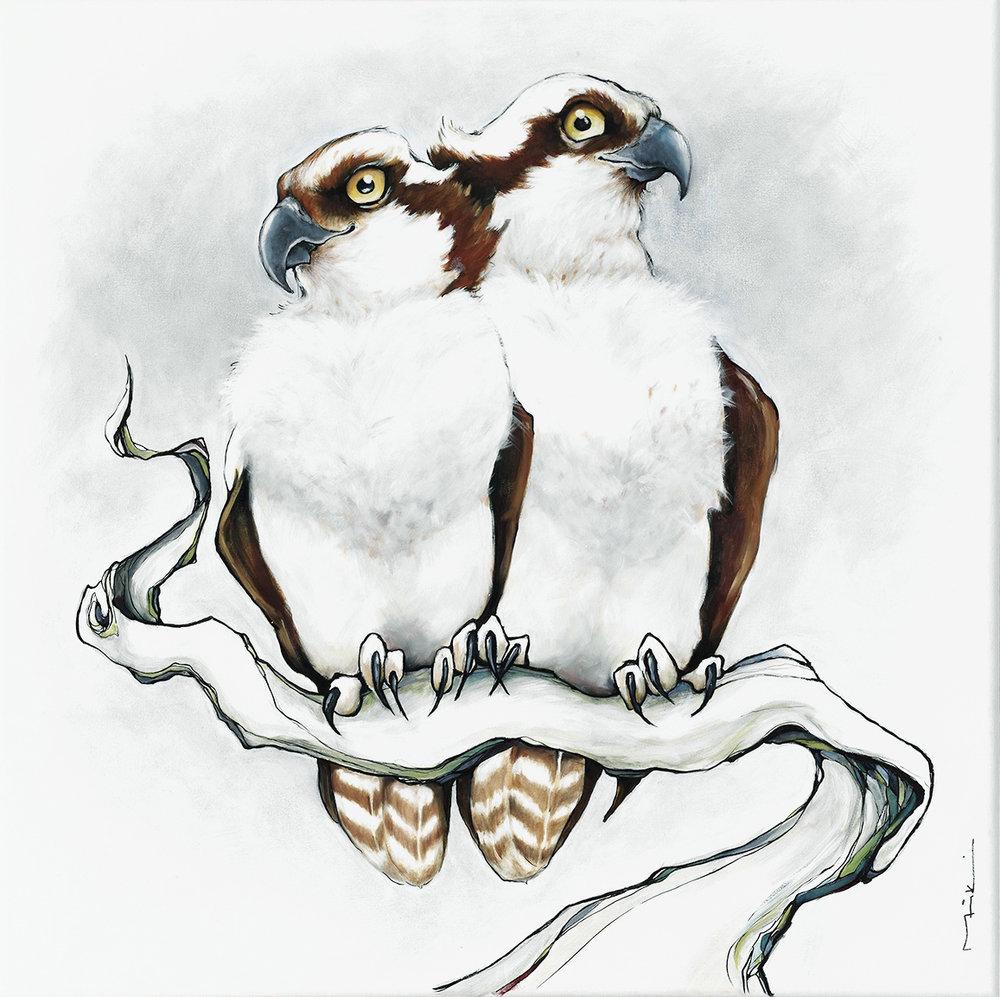 20MP web share osprey.jpg