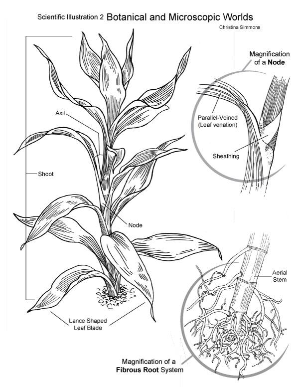 plant-diagram.jpg