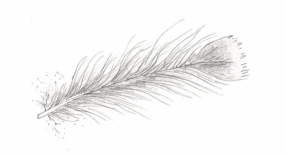 feather KJ.jpg