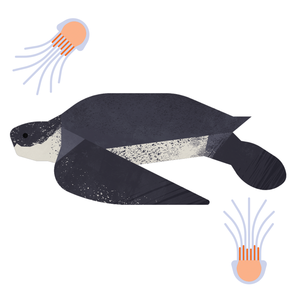 capebreton_poster_animals_leatherbackturtle.png
