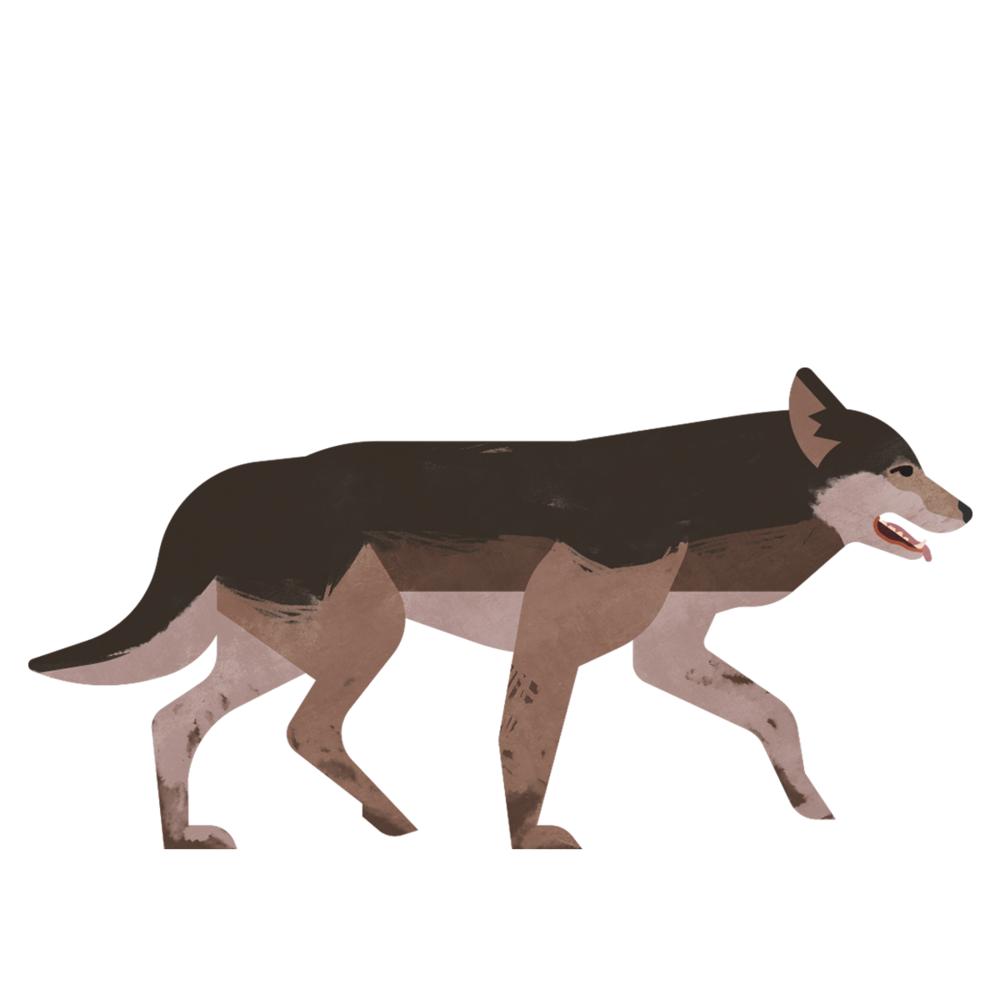 capebreton_poster_animals_timberwolf.png