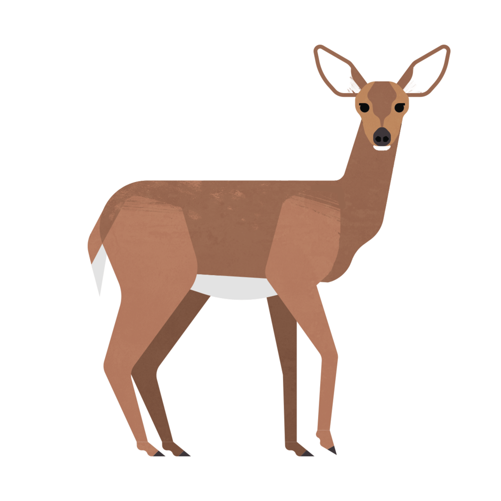 capebreton_poster_animals_whitetaileddeer.png