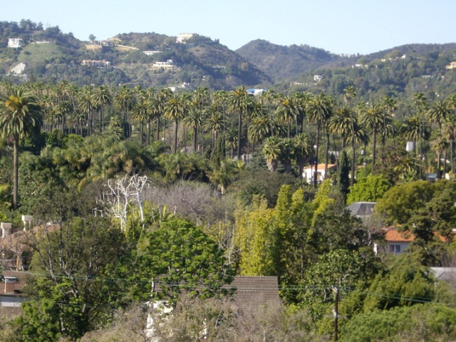 Benedict Canyon from the Beverly Hills flats.