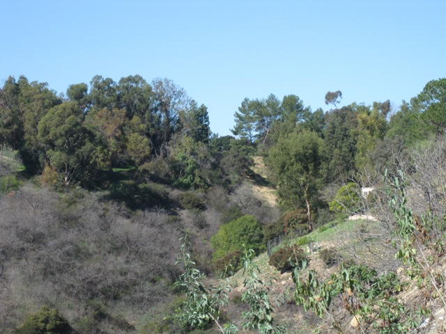 Looking north to the top of our canyon before it meets Mulholland Drive.