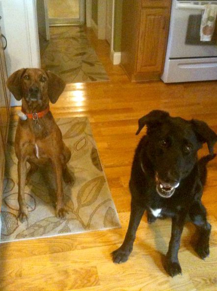 Dixie and Samson, awaiting their well-deserved treats!
