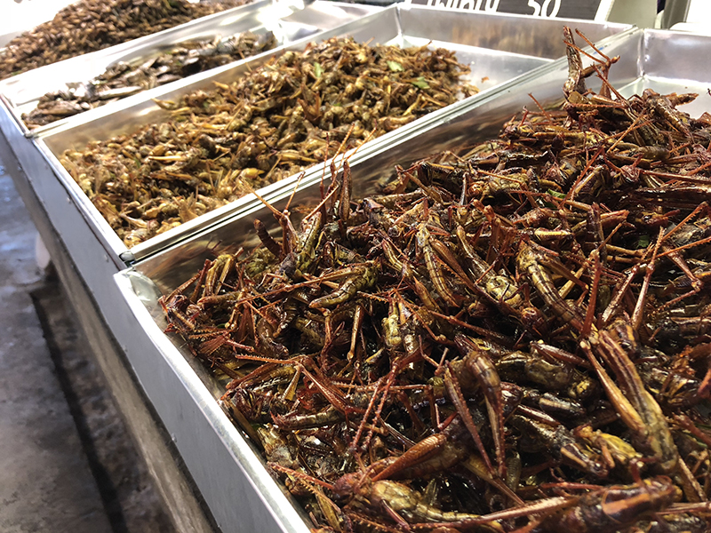 yum crickets. great protein.