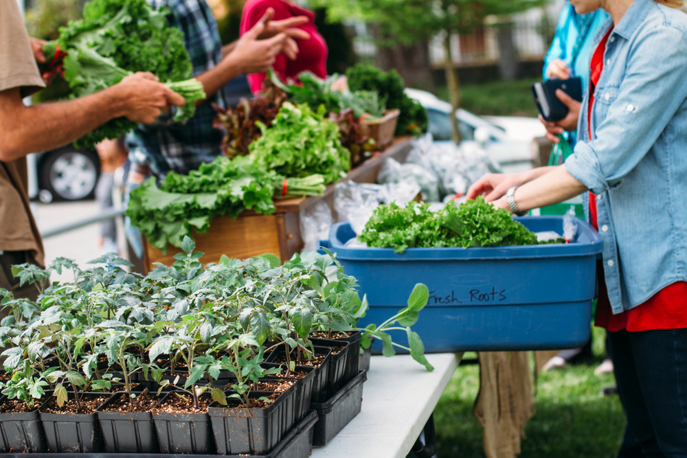 Fresh Roots 'Good Food' Market @ David Thompson Secondary  |    Photo:  Britney Gill Photography