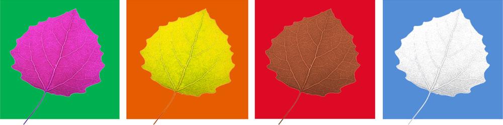 leaf7.jpg