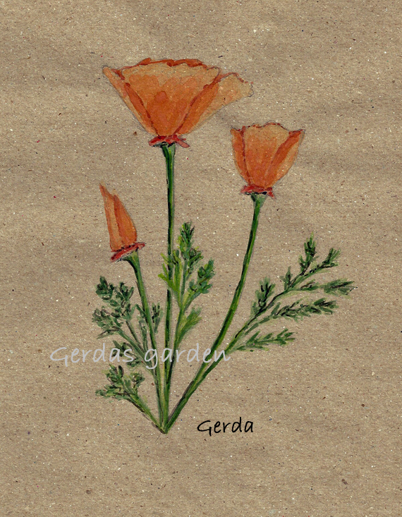 """California Poppy"""