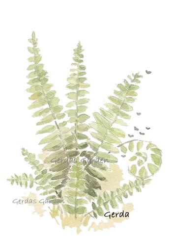 """Fern"" botanical watercolor"