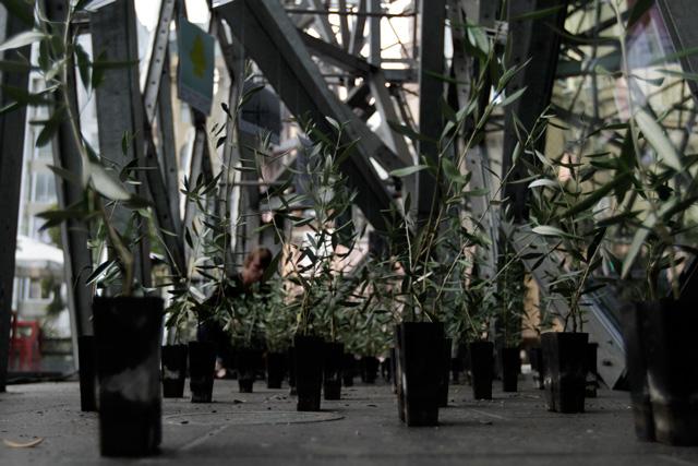 in-the-pines-09.jpg