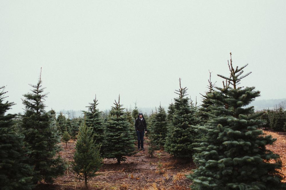 sczebel__evans_2013_christmas-4.jpg