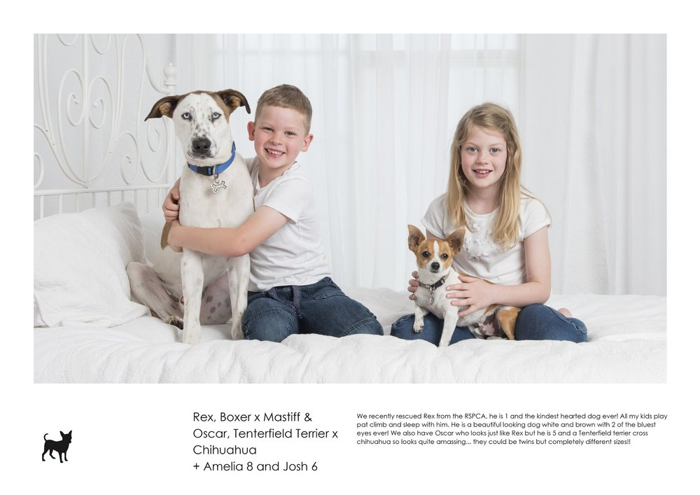 D8417- Rex, Boxer x Mastiff & Oscar, Tenterfield Terrier x Chihuahua + Amelia 8 and Josh 6.jpg