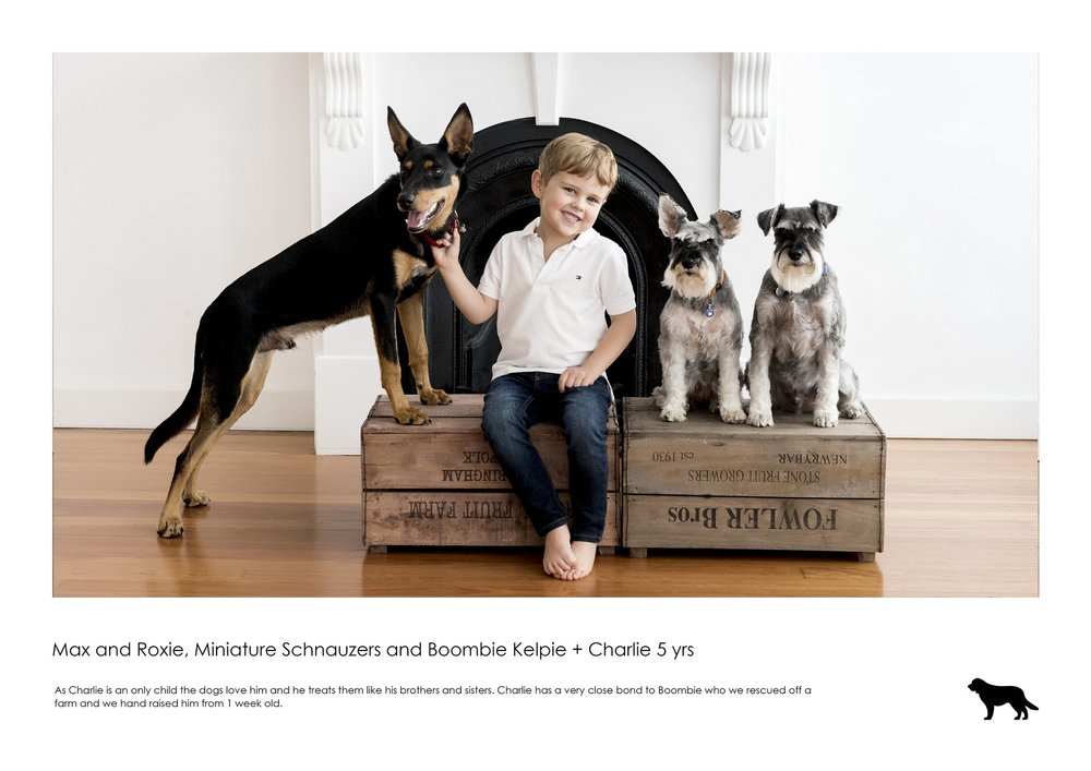 D2917- Max and Roxie, Miniature Schnauzers and Boombie Kelpie + Charlie 5 yrs.jpg