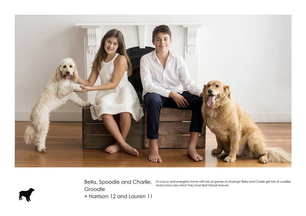 D3717-Bella, Spoodle and Charlie, Groodle + Harrison 12 and Lauren 11.jpg