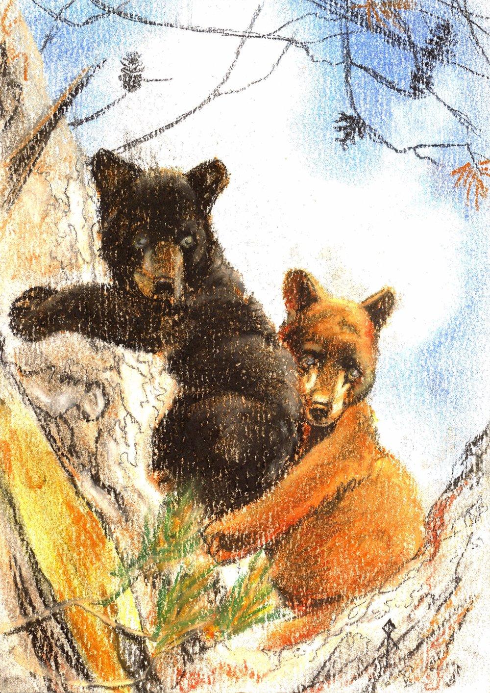 baby bears.jpg