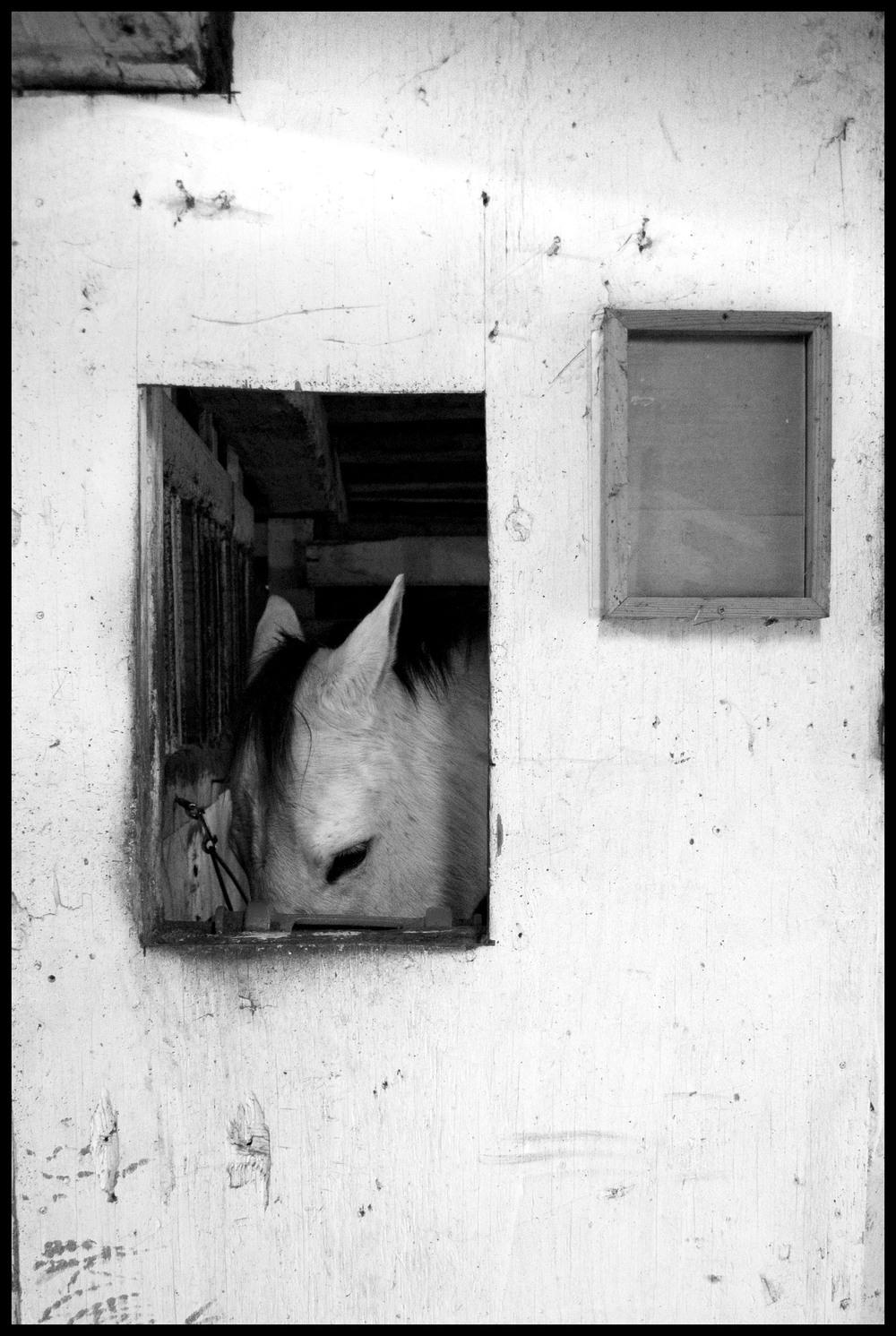 framed_horse.jpg