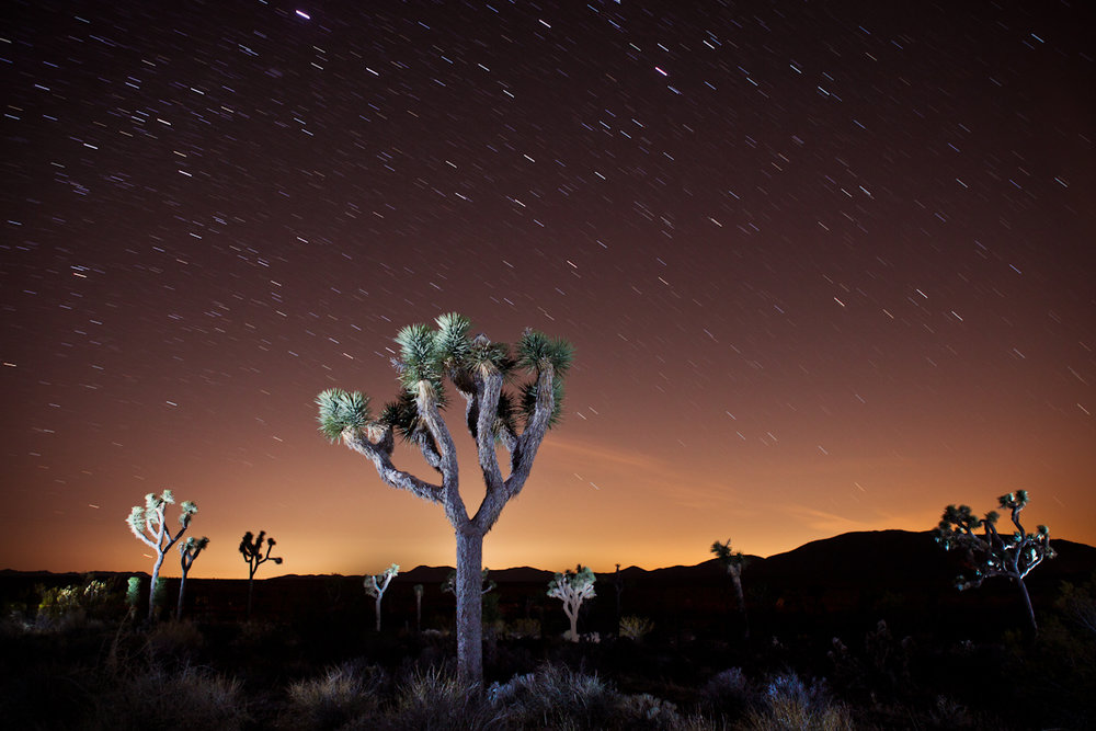Guided Night Photography  in Joshua Tree, CA - August 26th 2017  - $490 Per PersonBook Through AirBnB Experiences