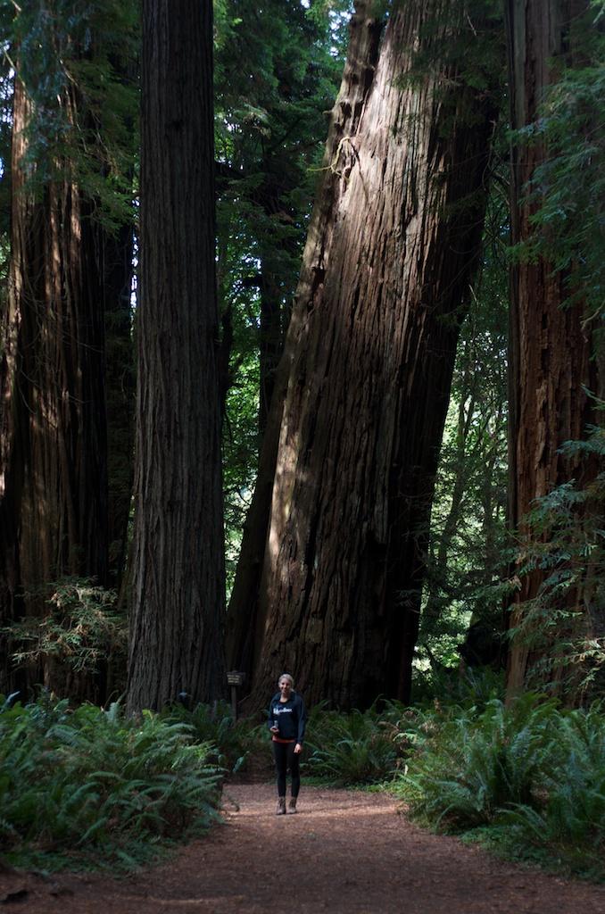 CARSON_LEH_SPLY_MFG crater lake-redwoods 2.jpg