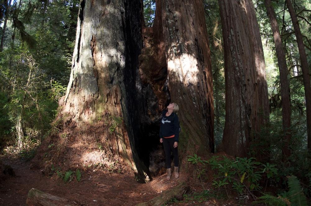 CARSON_LEH_SPLY_MFG crater lake-redwoods 7.jpg