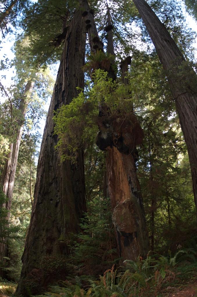 CARSON_LEH_SPLY_MFG crater lake-redwoods 8.jpg