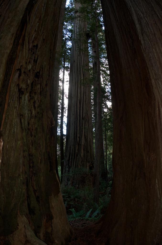 CARSON_LEH_SPLY_MFG crater lake-redwoods 9.jpg