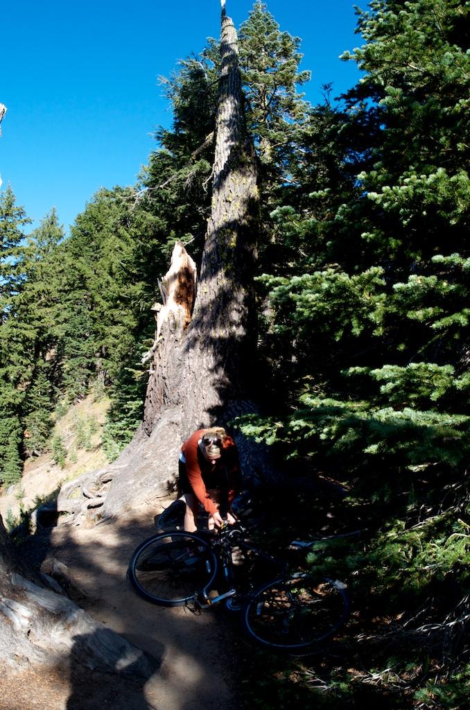 CARSON_LEH_SPLY_MFG crater lake-redwoods 23.jpg